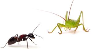 Ant or Grasshopper
